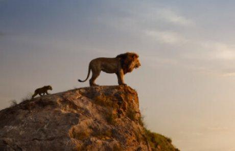 """""""מלך האריות"""" 2019 – עוד פעם אנימציה ולא אחרת…  גידי אורשר"""